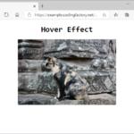 CSS / 마우스 오버 효과 /  이미지 확대